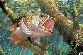 Large mouth bass fishing can found nearby Stonewall Farm.